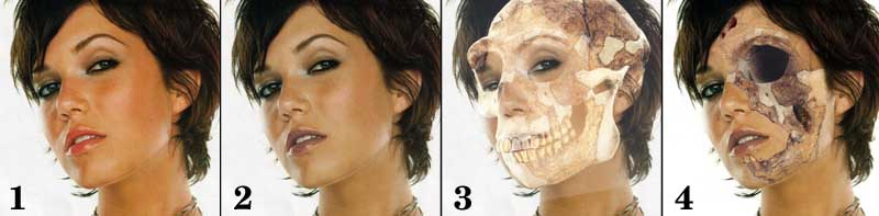 Zombie Photoshop Effects,Photoshop.Free Download X-Ray Wiring Diagram And Photo Torax